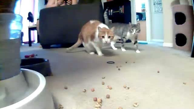 dispensing-treats-petzi-treat-cam