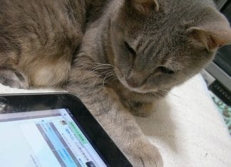 cat-ipad-games
