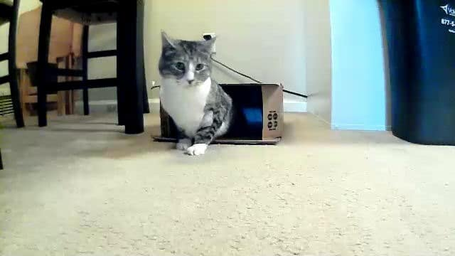 bit-coming-out-box-petzi-treat-cam