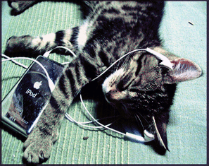 circlemusic-cat-jamming-years