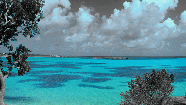 Add-Color-Splash-Effect-to-Your-Photos-Online-with-These -3-Tools