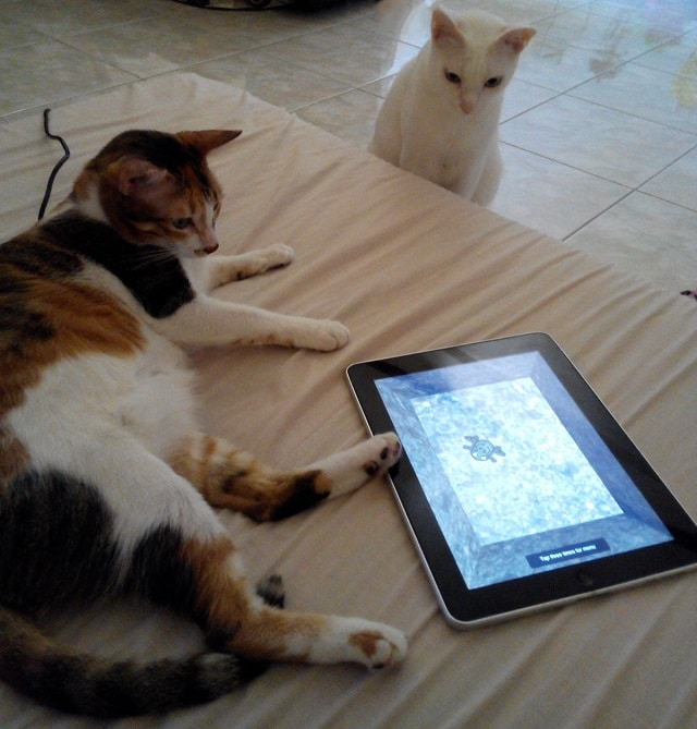 Cats and Cat Toys on iPad 1